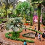 สวนนงนุชพัทยาน่าเที่ยว12