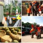 nong_nooch_tropical_garden_37393_deal_large_6