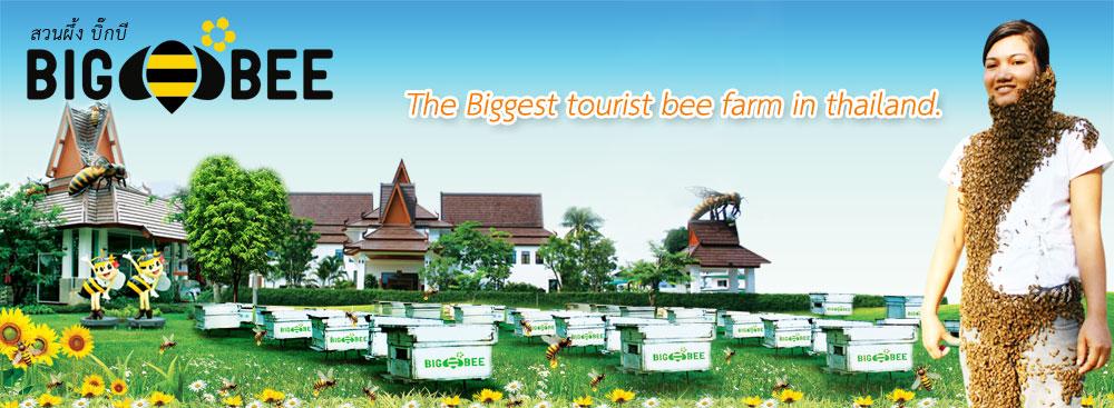 สวนผึ้งพีทยา Big Bee
