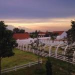 ฟาร์มแกะ สถานที่ท่องเที่ยวพัทยา15