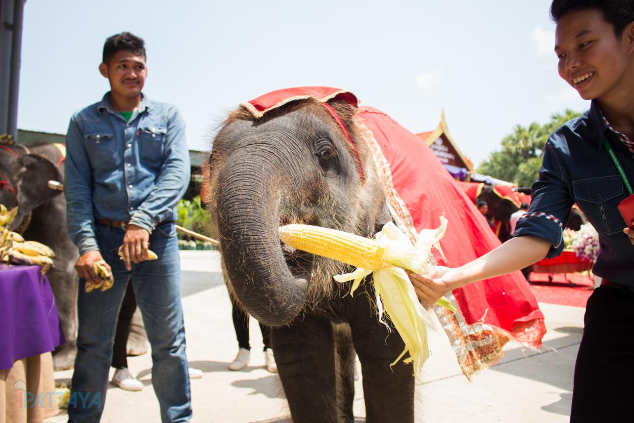 วันช้างไทยสวนนงนุชพัทยา10