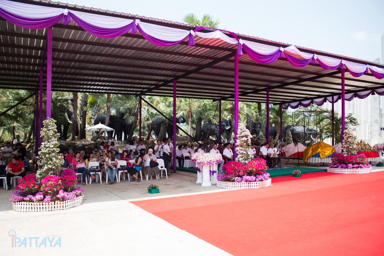 วันช้างไทยสวนนงนุชพัทยา2