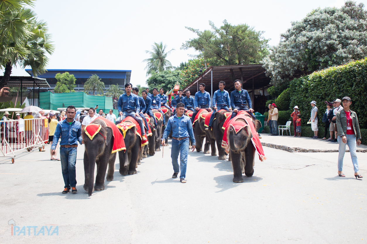 วันช้างไทยสวนนงนุชพัทยา5