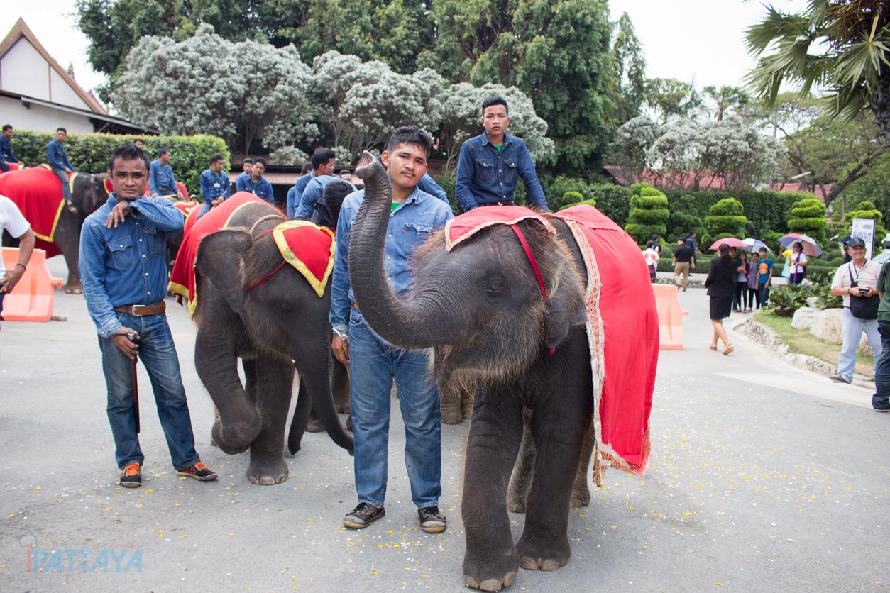 วันช้างไทยสวนนงนุชพัทยา6
