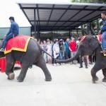 วันช้างไทยสวนนงนุชพัทยา7