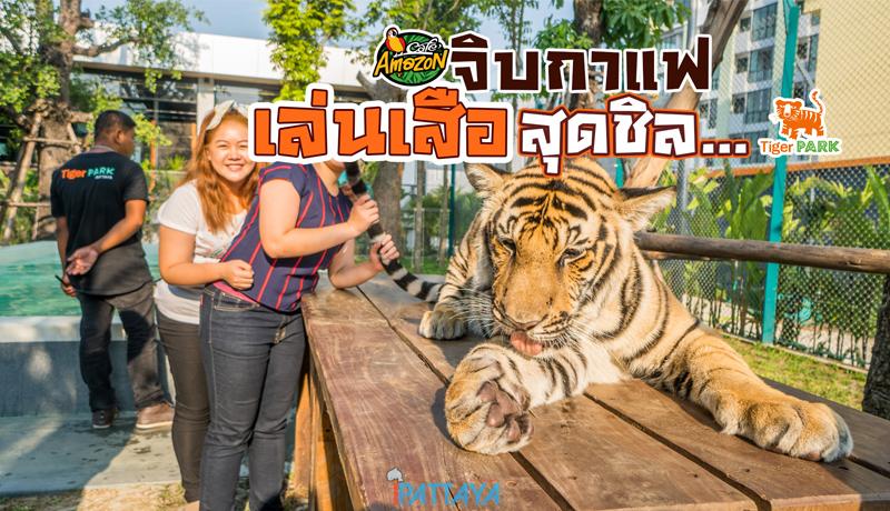 Tiger Park สวนเสือพัทยาใหม่!สุดชิล พักรถก็ได้ เล่นกับเสือก็ดี กับข้าวก็อร่อย ...