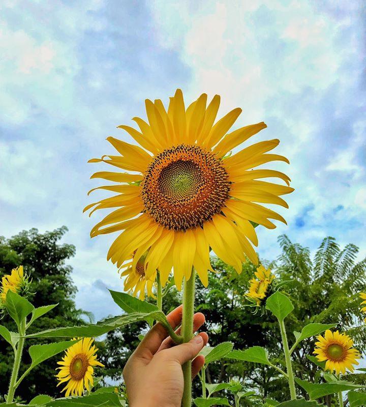 flowerlandpattaya2